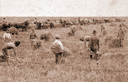286 North Dakota Farming - 1899